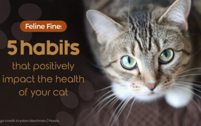 Feline Fine – 5 habits that positively impact the health of your cat